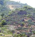 産地:福建省